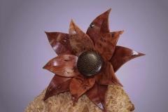 Blüte aus Jarrah - Thomas-Häckel