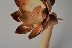Blüte aus Apfelbaum und Nuß - Thomas Häckel